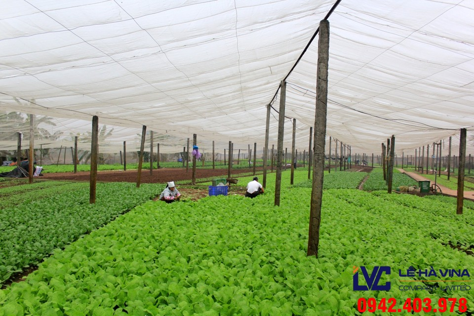 Lưới che nắng trồng rau, Công ty Lê Hà Vina, Lưới che nắng Thái Lan, Lưới che nắng, Lưới che nắng vườn rau
