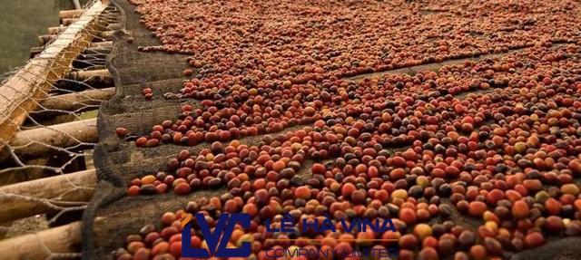Lê Hà Vina, Lưới, Lưới phơi nông sản, Lưới phơi