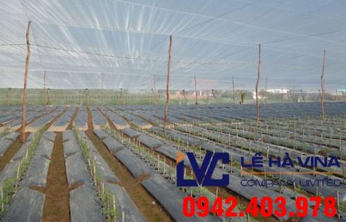 Lưới chống côn trùng trồng rau, Lưới chống côn trùng, Công ty Lê Hà Vina, Lưới Thái Lan, Lưới