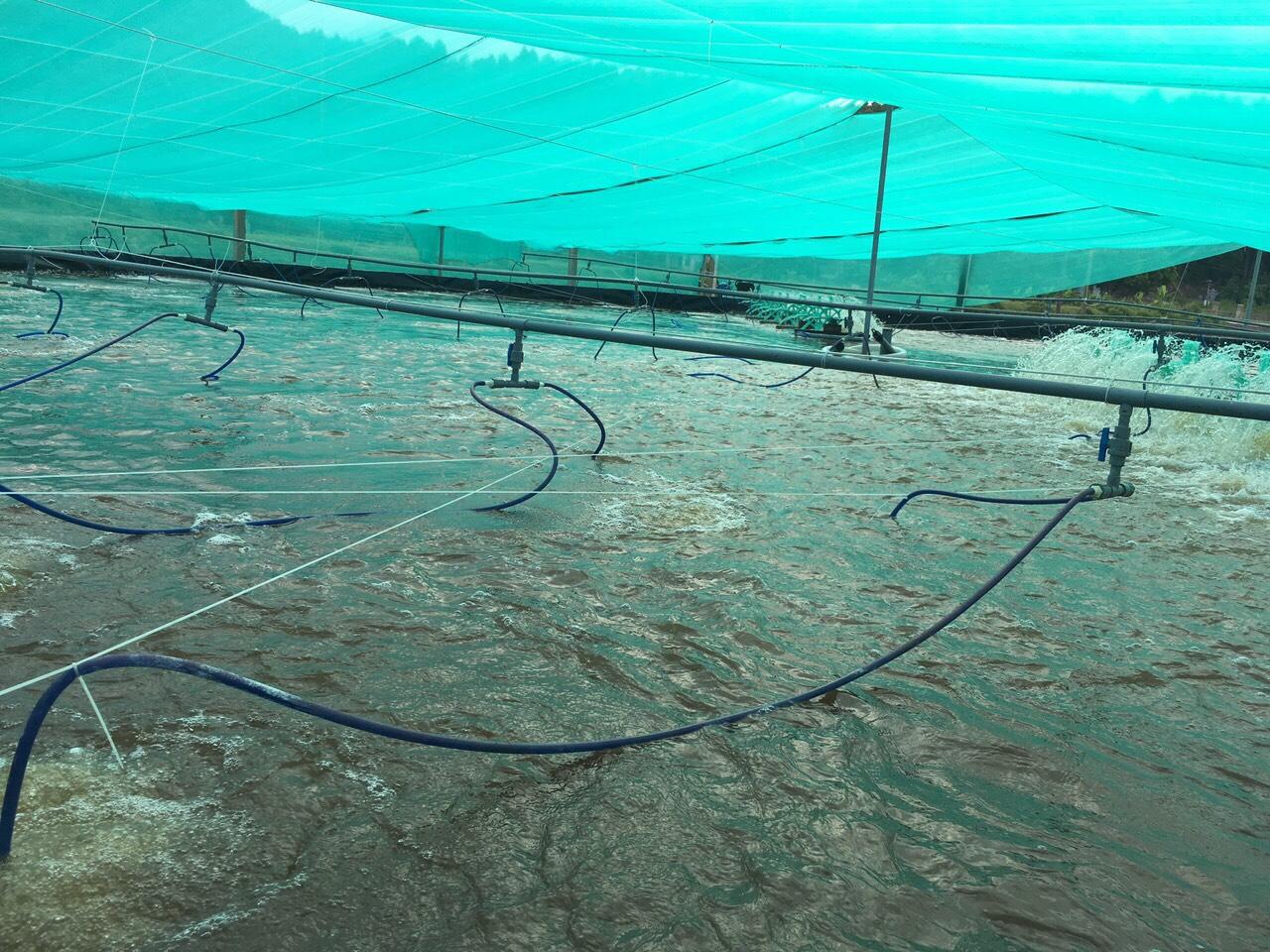 Lưới che nắng ao nuôi tôm, Lưới che, Lê Hà Vina, Địa chỉ bán lưới che nắng, Sản phẩm lưới che nắng Lê Hà Vina, lưới đều màu, Công ty Lê Hà Vina